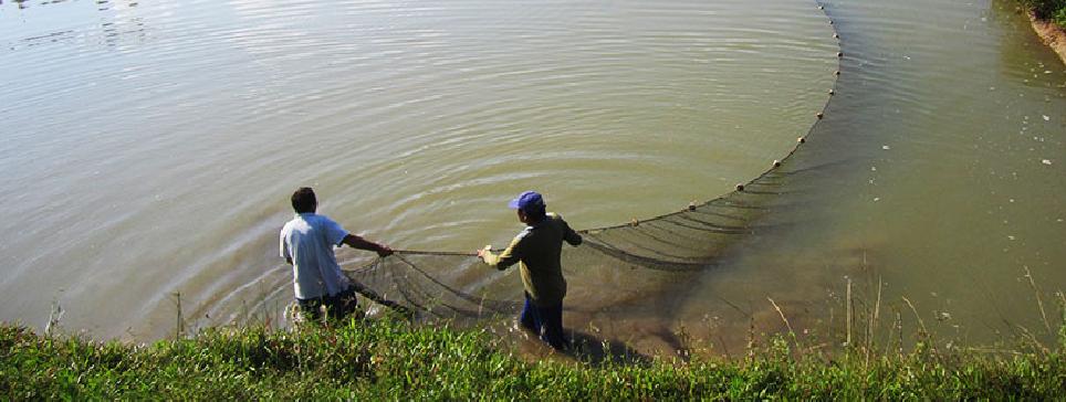 FONDEPES brindó asistencia técnica personalizada a los acuicultores de la Región Ayacucho